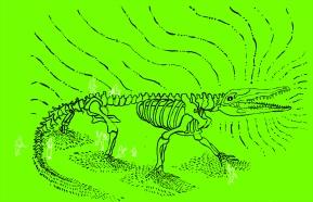 croc spirit
